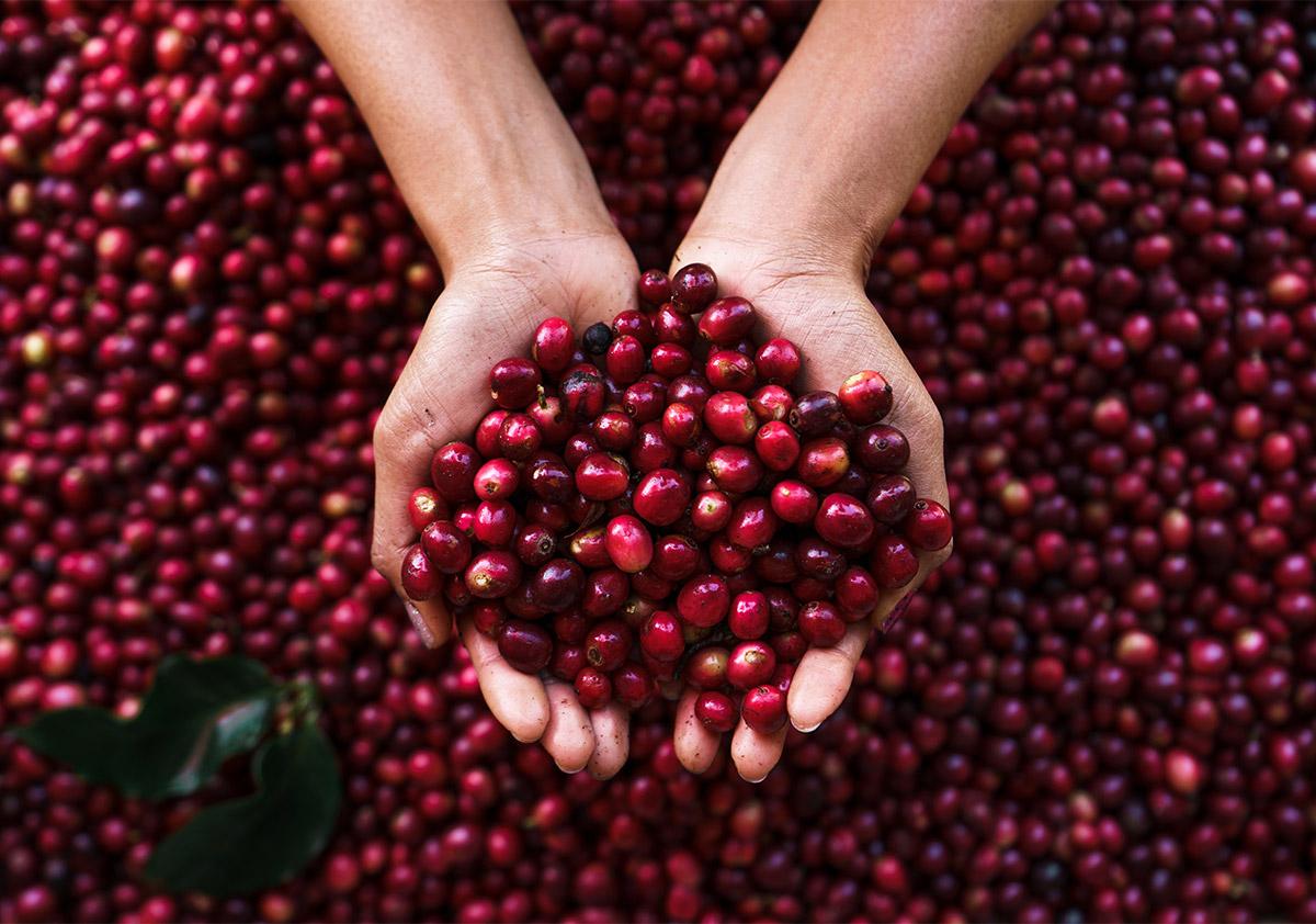 Coffee processing method
