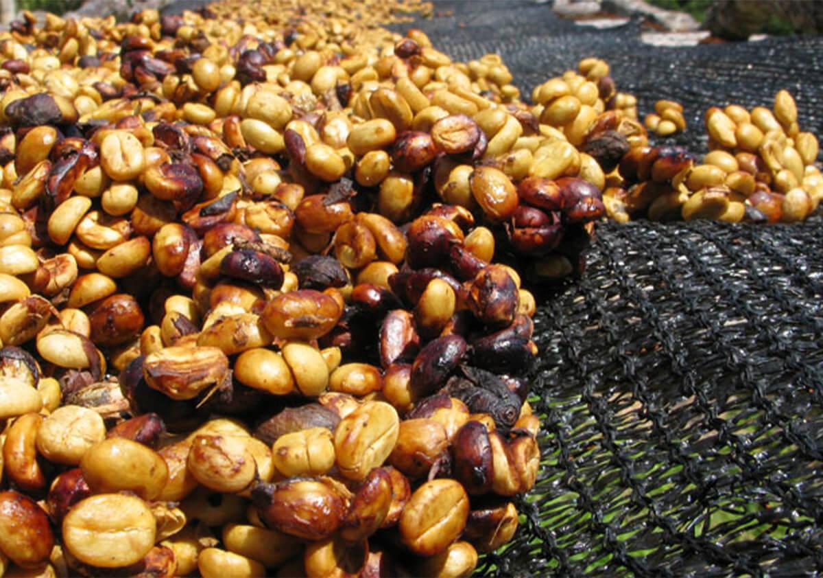 Honey processing method